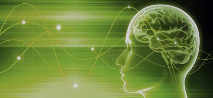 Gehirn4